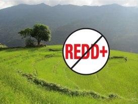 No-REDD-Rice